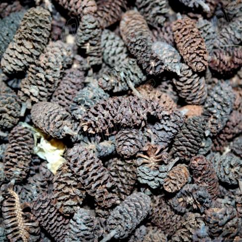 Κουκουναράκι Μίνι BIRCH Φυσικό   ~200gr.