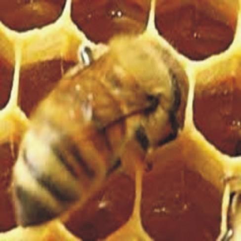 Αγνά Κεριά Μέλισσας
